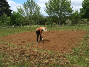 Sylvia preparing the soil by hand to make sure it was as fine and weed free as possible
